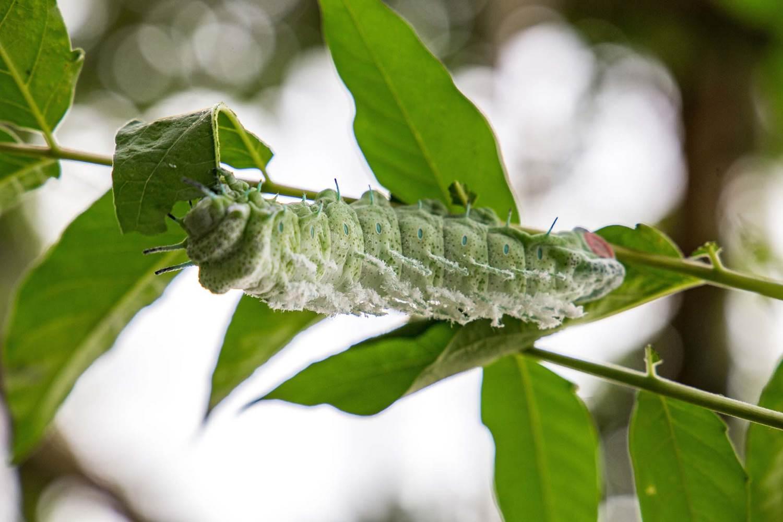 jardin-aux-papillons-morbihan-bretagne-sud-21 © © Magalie BARRE