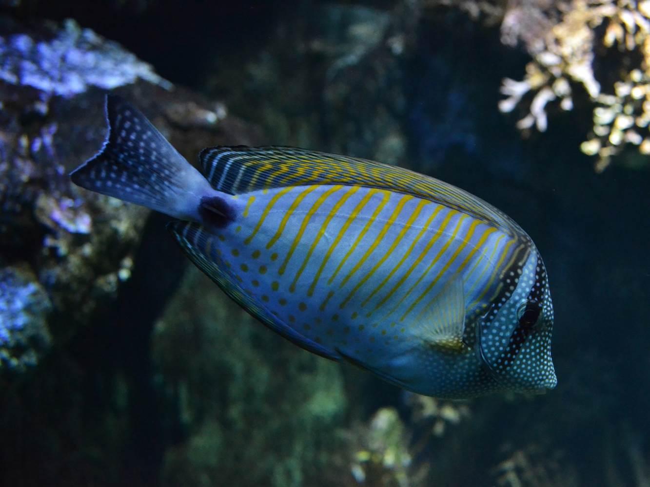 Aquarium-de-Vannes-Morbihan-Bretagne-Sud ©