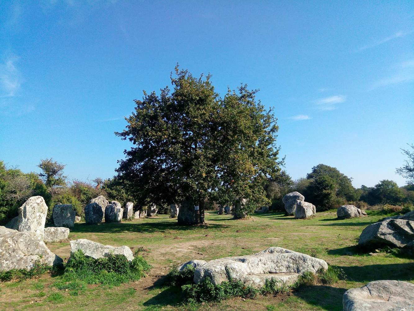 Les menhirs du site de Kerzérho à 800 mètres de la maison d'hôtes ©