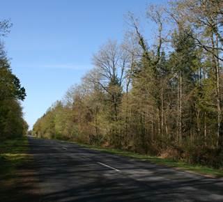 Forêt Domaniale de Coeby