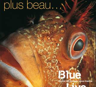 Blue Live - Plongée