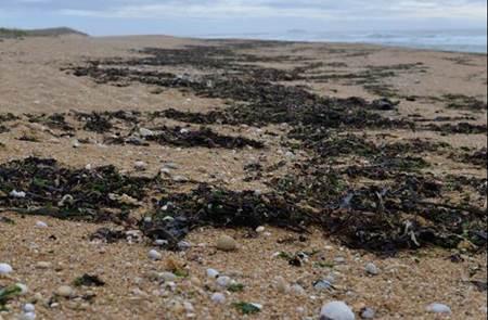 Balade Découverte des algues