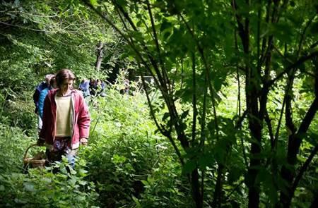 Balade « à la rencontre des arbres et plantes sauvages »